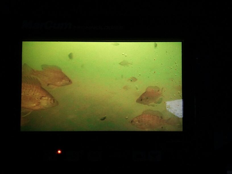underwater camera bluegills